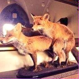 Janice's fox twitter post to Dave